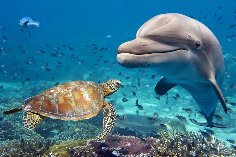 Une tortue et un dauphin près d'un récif. Crédit photo : Andrea Izzotti, Schutterstock.