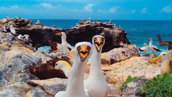 Galapagos 3D - Merveilles de la nature